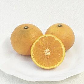 【その他柑橘系ミカン属】ポンカン(接木苗)4号LLポット