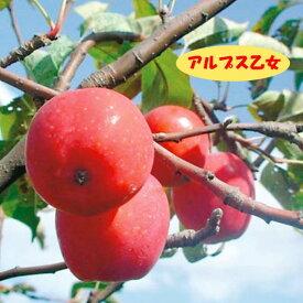 【リンゴ属】りんごアルプス乙女(接木苗)4号LLポット
