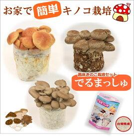 【きのこ栽培セット】でるまっしゅ菌床キノコ栽培セット