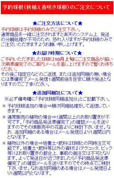 送料無料!3000円!予約球根【チューリップ】やわらかピンク系Bセット(10球入×4花色)