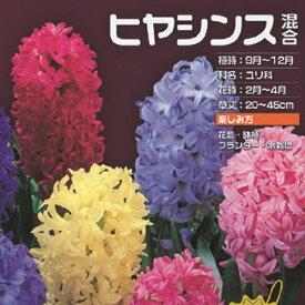 予約球根【お徳用ヒヤシンス】5色混合(色別テープ巻き計5球入)