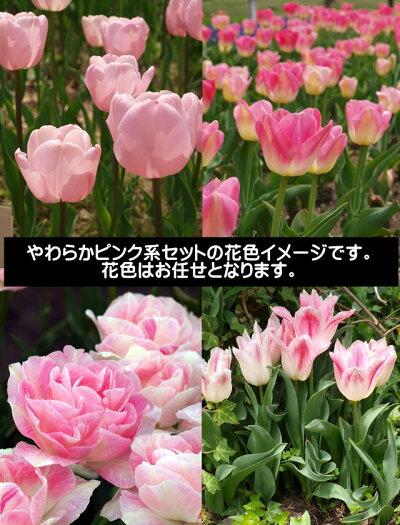 お庭、玄関を華やかに可愛らしくしたい方におすすめのセットです。植え込み事例