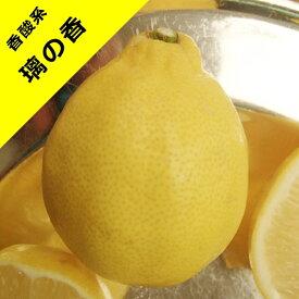 【ミカン属】璃の香レモン(一年生接木苗)4号LLポット