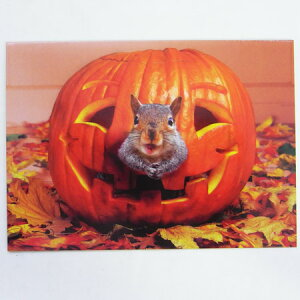 701506 ハロウィンカード かぼちゃから リス! [AVANTI]りす・秋・HALLOWEENメッセージ・ギフトカード・グリーティング