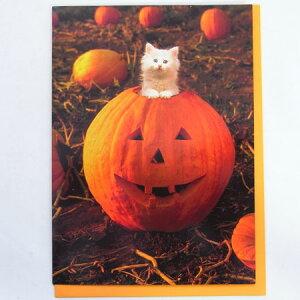 701508 ハロウィンカード かぼちゃから 白猫![AVANTI]ネコ・猫・秋・HALLOWEENメッセージ・ギフトカード・グリーティング