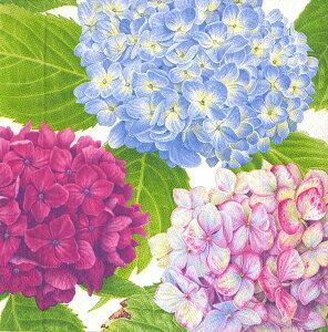 10枚ペーパーナプキン あじさいガーデンブルー紫陽花 アジサイCaspari カスパリ