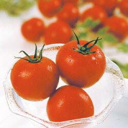 ミニトマト(越のルビー)