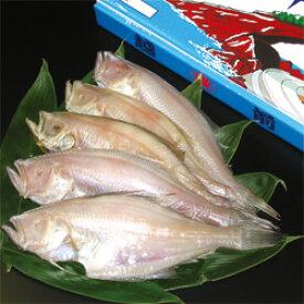 ★地カレイ一夜干し 7〜10枚(900g)【冷凍】漁によって大きさが変わります。【同送不可】