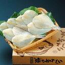 酒の肴に、お茶漬に最適!焙りカレイA 20〜23匹(500g)【送料無料】【福井 お土産】
