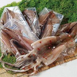 日本海 甘塩イカ新鮮なスルメイカを大切なあの方へ【送料無料】【冷凍】