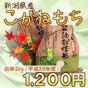 新米 新潟県産 もち米の王様 こがねもち 2kg 平成28年産