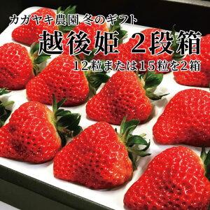 【予約受付開始】新潟のいちご 越後姫 12〜15粒入×2箱【冬ギフト】