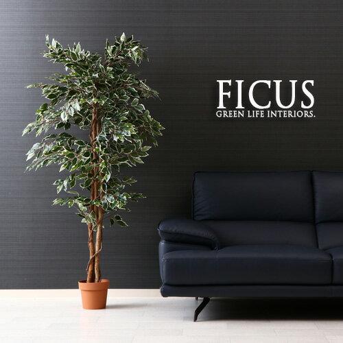 観葉植物 フェイク FICUS フィカス ゴムの木 B 170cm 大型 造花 インテリア 植物 フェイクグリーン 人工観葉植物 イミテーション リアル 大きめ 大きい 本物そっくり おすすめ おしゃれ かわいい プレゼント 送料無料 セール