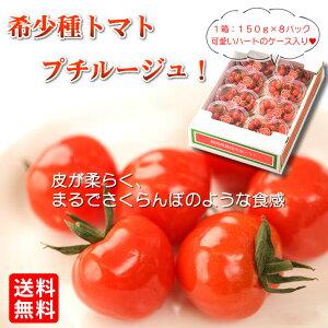遅れてごめんね 敬老の日 ギフト プレゼント《プチルージュ1.2Kg(150g×8パック)》送料無料トマト ミニトマト 産地直送 お取り寄せグルメ 食品 静岡県 藤枝市 贈り物