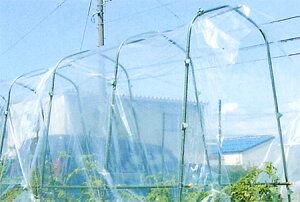 第一ビニール 菜園用雨よけシート 0.05mm×2.3m×5m 【菜園 園芸 家庭菜園 ガーデニング ビニールシート ビニールハウス 価格 用品】【おしゃれ おすすめ】 [CB99]
