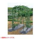 第一ビニール 菜園つる棚セット TDS-1.8 80cm×180cm 【家庭菜園 キュウリ ゴーヤ エンドウ 小玉スイカ 小型カボチャ …