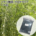 フタバ種苗 クロタラリア 1kg 【種子 種 タネ たね 緑肥作物 緑肥 栽培 すきこみ 肥料 センチュウ 線虫】【おしゃれ …