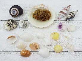 ■メール便可(2袋まで)■ヤドカリの小学校【約1.5〜4.0cm】貝 貝殻 シェル 小屋 ハウス 海 マリン 沖縄 ビーチ