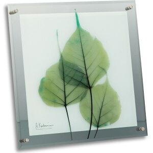 X Ray ガラスアート(レントゲンアート) グリーンユーカリ(壁掛用)(Mサイズ)