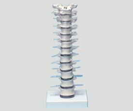 【送料無料】ナビス 胸椎モデル 385×150×130 8-8421-01