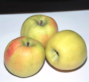 リンゴ 青林 接木苗 1本