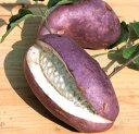 アケビ 紫水晶(R) 4号 1本(入荷予定:2020年11月頃)