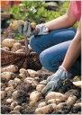 ジャガイモ デフラ 種イモ 2kg