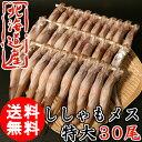 (送料無料) 北海道産 子持ち ししゃも メス 30尾 特大 柳葉魚 北海道 海鮮 貰って嬉しい 贈答 贈物 /クール便