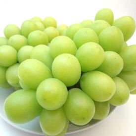 長野県産 種無しブドウ シャインマスカット 1房入り マスカットを超えた葡萄の新品種! 皮のついたまま丸ごと食べられる種無しブドウの人気品種