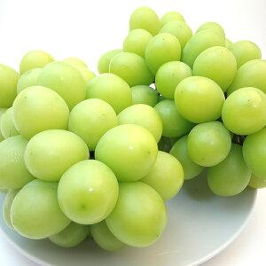 長野県産 種無しブドウ シャインマスカット 2房入り マスカットを超えた葡萄の新品種! 皮のついたまま丸ごと食べられる種無しブドウの人気品種