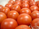 高知県産 徳谷トマト 2kg 生産者52番 セレブ・芸能人ご用達の高級トマト!独特の甘さと濃厚な味わいが絶品!しかも歯…