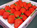 愛媛、徳島県産いちご 紅ほっぺ 24粒(化粧箱入り) ホワイトデーのプレゼントにおすすめ チョコ以外 ひな祭り 出荷…