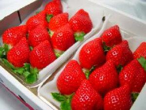 福岡県産 イチゴ あまおう とよのかの後継品種として誕生した九州を代表するブランド苺♪ お歳暮ギフトにおすすめ お年賀 【#元気いただきますプロジェクト】  出荷予定:12月上