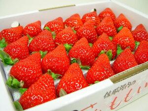 徳島県佐那河内村産 さくらももいちご 24粒入り 市場へ出荷されて間もない苺の新品種!甘さ抜群でとっても食味が良いイチゴの逸品! ホワイトデーのギフトにおすすめ ひな祭り