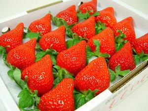 徳島県佐那河内村産 さくらももいちご 16粒入り 市場へ出荷されて間もない苺の新品種!甘さ抜群でとっても食味が良いイチゴの逸品! ホワイトデーのギフトにおすすめ ひな祭り 発送