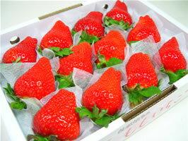 徳島県佐那河内村産さくらももいちご 12粒入り 市場へ出荷されて間もない苺の新品種!甘さ抜群でとっても食味が良いイチゴの逸品!  配達日指定不可 発送:2018年1月上旬〜2月中旬の間