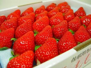 徳島県佐那河内村産 さくらももいちご 28粒入り 市場へ出荷されて間もない苺の新品種!甘さ抜群でとっても食味が良いイチゴの逸品! ホワイトデーのギフトにおすすめ ひな祭り 発送