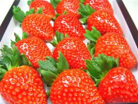 奈良県産いちご 古都華(ことか) 大粒12入り 2010年に市場に投入された奈良県期待のいちごの新品種!高糖度で甘さ抜群!しっかりとした果肉は食味の良さが抜群! ホワイトデーのギフトにおすすめ ひな祭り 出荷予:2020年1月上旬〜