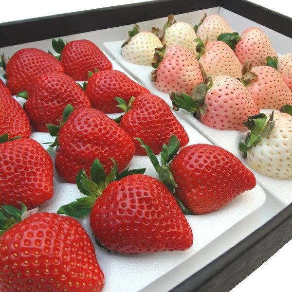 紅白いちご詰合せ 佐賀県産 白いちご 雪うさぎ 大粒12入り  福岡県産いちご あまおう 大粒12入り