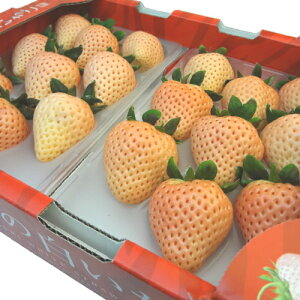 奈良県産 白い苺 淡雪 18〜30粒入り 2013年に品種登録された白いイチゴ 佐賀ほのか が突然変異して生まれた苺の新品種 味わいは さがほのか にそっくり *北海道、沖縄への出荷には