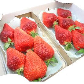 佐賀県産、高知県産 いちご ゆめのか  2007年に品種登録されたイチゴの新品種!甘くてしっかりとした食感の本格苺 お歳暮ギフトにおすすめ ひな祭り 出荷予定:11月下旬〜 【#元気いただきますプロジェクト】