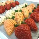 奈良県産 3色いちご 詰合せ 古都華 淡雪 パールホワイト 赤い苺、ピンク色のイチゴ、白い苺を同時に楽しめるセッ…