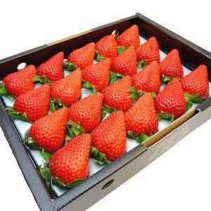 徳島県産 いちご ゆめのか 化粧箱入り 高糖度な苺の新品種 お歳暮ギフトにおすすめ 発送予定:12月上旬〜 【#元気いただきますプロジェクト】