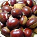 熊本県産 利平栗 4Lサイズ 2kg  大粒で食べ応えアリ!くりの中で最も美味しいといわれる最高級品種!クリの甘みと旨みがギッシリ詰まった美味しさを楽しめる逸品...