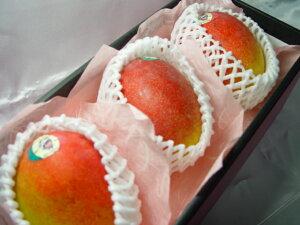 【送料無料】メキシコ産アップルマンゴー3個(化粧箱入り) 輸入マンゴーの最高峰! 出荷予定:4月上旬〜