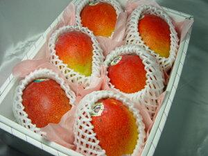 【送料無料】メキシコ産アップルマンゴー6個(化粧箱入り) 輸入マンゴーの最高峰!  出荷予定:4月上旬〜