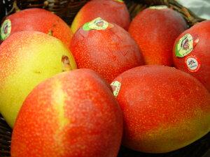 【送料無料】メキシコ産アップルマンゴー 3個入り トロピカルフルーツの逸品!  出荷予定:4月上旬〜