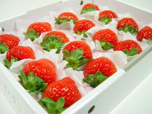 熊本県産 ひのしずく 化粧箱入り 甘くて食味の良さが絶品!イチゴの新品種! バレンタインのプレゼントにおすすめ チョコ以外 出荷予定:12月上旬〜 【#元気いただきますプロジェ