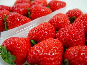 熊本県産 ひのしずく  甘くて食味が良い熊本生まれのいちごの新品種! バレンタインのプレゼントにおすすめ チョコ以外 出荷予定:12月上旬〜 【#元気いただきますプロジェクト】