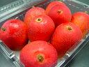 宮崎県産 完熟 ミニマンゴー  ちっちゃなマンゴーだけどメチャうま!一口サイズの完熟マンゴー!甘くて濃厚な味わいが絶品! お中元ギフトにおすすめ